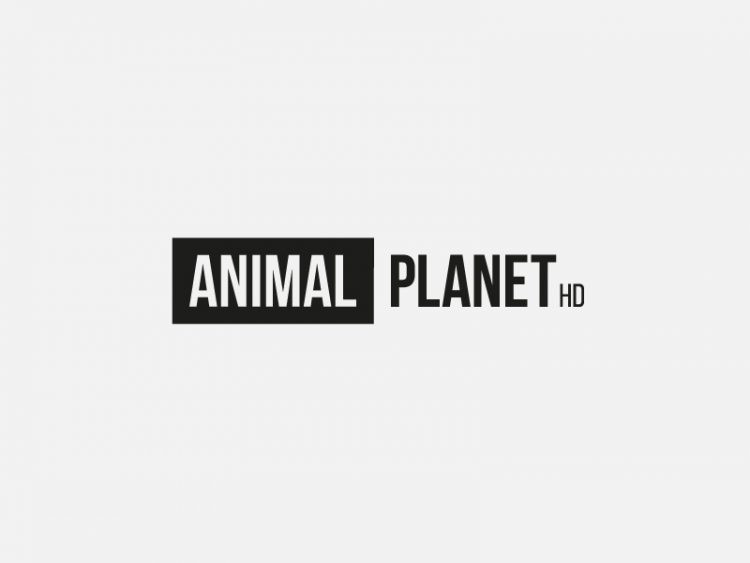 rebranding; redesign animal planet hd